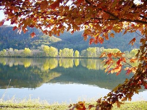 autumn leaves at lake