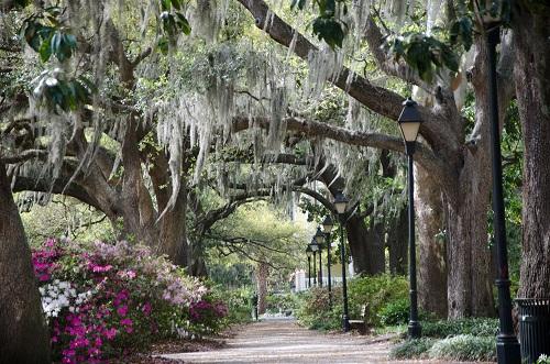 Georgia park path