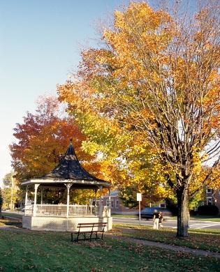 yellow trees in fall