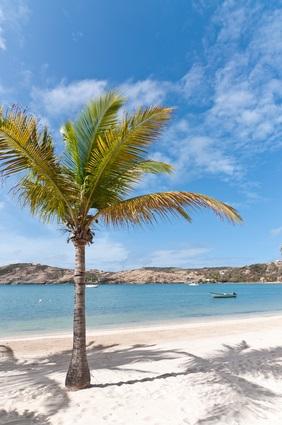 white sand beach and palm tree